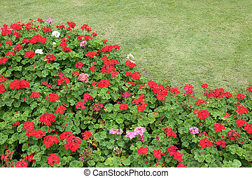 red flowers in green grass garden