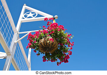 Red flowers in hanging basket on white frame. Bright blue...