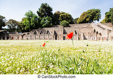 Red Flowers in Pompeii Clover
