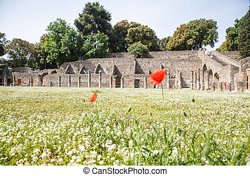 Red Flowers in Pompeii Meadow