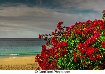 red flowers in the background a beach by the sea