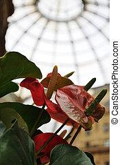 Red flowers in the Gallery Vittorio Emanuele II in Milan, Italy