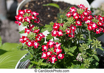 Red flowers in the spring