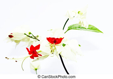 red flowers isolated on white background