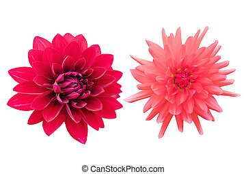 Red flowers isolated on white background with clipping path by Macro lens .