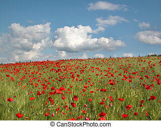 Red flowers landscape