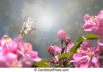 red flowers of a wild apple tree, a butterfly flies on a flower