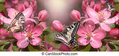 red flowers of a wild apple tree, butterflies sit on a flower, panorama