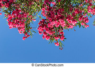 Red flowers of rhododendron Azalea against the blue sky.