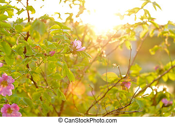 Red flowers on a branch in green foliage against the background of the river and sunset
