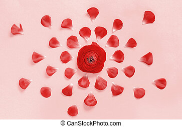 Red flowers on a pink background