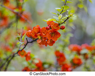 Red flowers on a tree branch on a blurous background