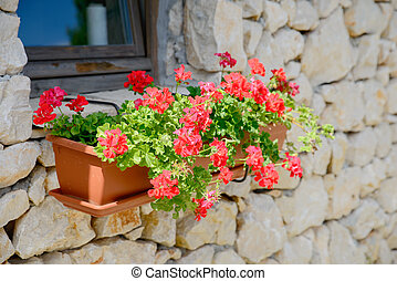 red flowers on a wall