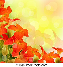 Red flowers on a white background, a spring primrose