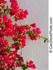 red flowers on a white wall