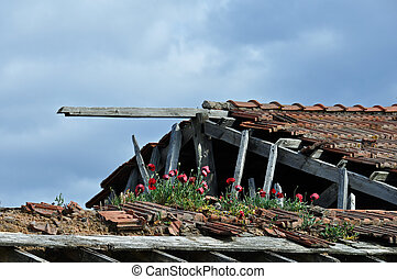 red flowers on roof of abandoned house
