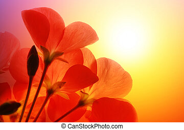 Red flowers over sunshine background - Red flower macro over...