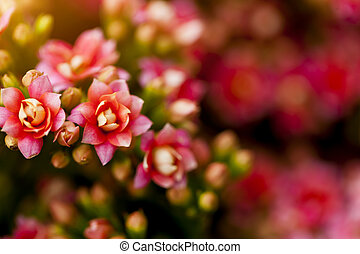 Red flowers under sunlight in spring