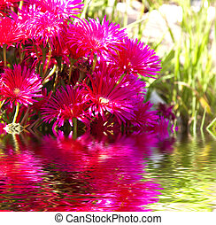 red flowers with reflection in water