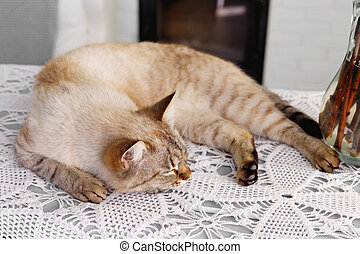 Red fluffy Siamese cat sleeps on background of wall