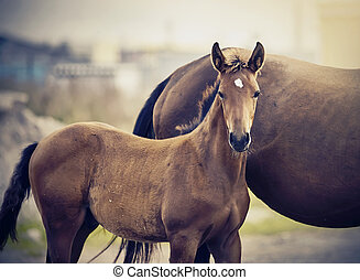 Red foal sporting breed with a mare. Small horse. Foal with ...