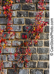 red foliage winds by Old stone wall - Old stone wall neatly...