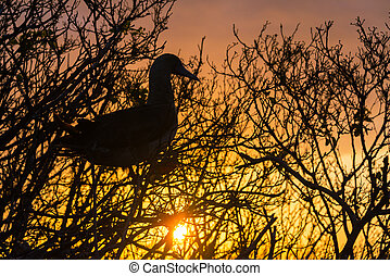 Red Footed Booby Sunset