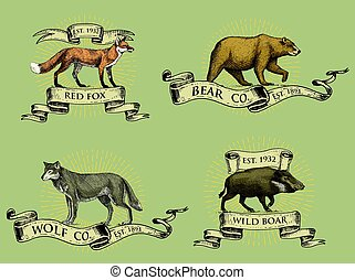 red fox, boar bear and grey wolf logos, emblems or badges with wild animals and banners or ribbons in vintage, retro old style, hand drawn engraving. sketch