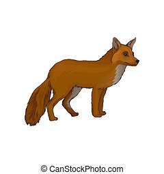 Red fox wild northern forest animal vector Illustration on a...