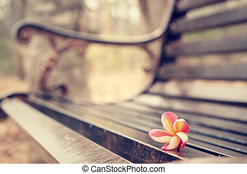 Red frangipani flower on bench chair