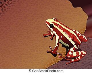 Red frog Epipedobates anthonyi (Dendrobatidae) - Vector...