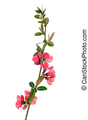 red fruit-tree flowers