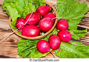 Red garden radish and fresh herbs