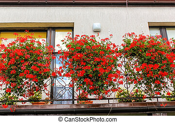 Red geranium flowers in pots on thebalcony of a family house