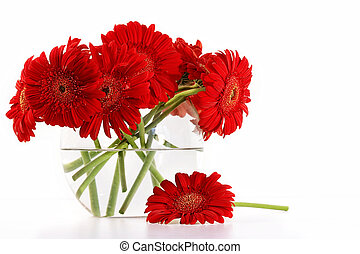 Red gerber daisies in glass vase