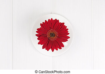 Red gerbera flower in cup and sauce on white wooden background. Closeup.