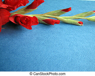 red gladiolus flowers on a background