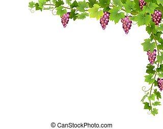 Red grape branch  in corner.