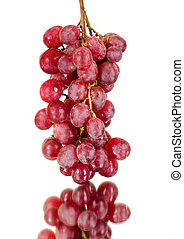 red grapes - still life single red bunch of grapes close up,...