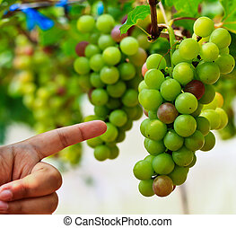 Red grapes.