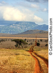 Red ground road and bush with savanna landscape in Africa....