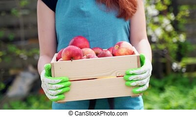 red haired girl holds in arms wooden box with ripe apples -...