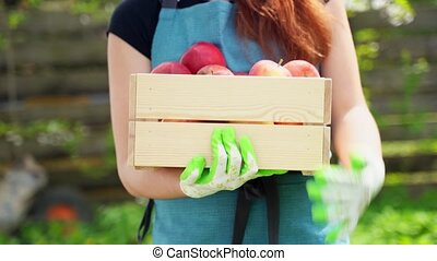 red haired woman holds in arms wooden box with ripe apples -...