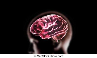 red head brain