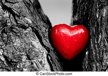 Red heart in a tree trunk. Romantic symbol of love, ...