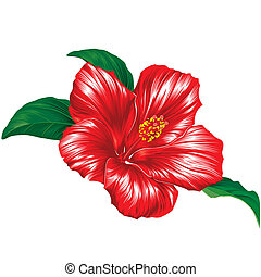 Red hibiscus blossom with leaves, editable vector illustration