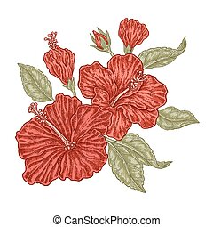 Red hibiscus flowers and leaves in vintage style.