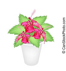 Red Hibiscus Flowers in A Flower Pot