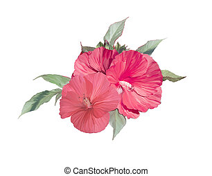 red hibiscus flowers watercolor