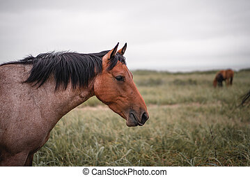 Red hoarse with black mane